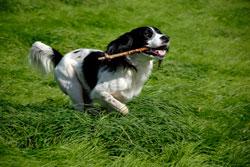 dog-welfare