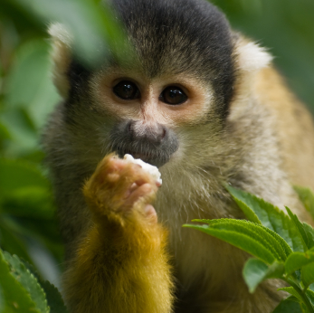 primate behavior research Primate behavior and ecology in ometepe, nicaragua this course is designed to be an extensive look at how primates adapt to their ecosystems both by physical.