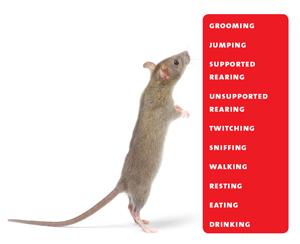 RBR   Overview of ten behaviors   small