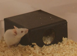 mouse-shelter
